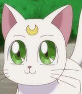 Artemis in Pretty Guardian Sailor Moon Crystal