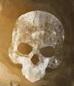 33º de Zapadores Sanabrianos - copia