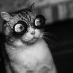 Dingus0's avatar