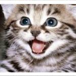 Smileeey's avatar
