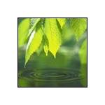 Vismut2005's avatar