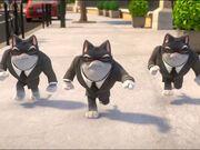 Rts 190607 0810 17c52d54 44 cats
