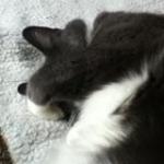 Lstace's avatar