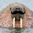 Mustache Walrus's avatar