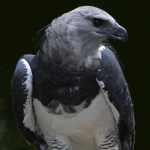 StaraptorEmpoleon's avatar