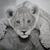 LionPrince13
