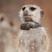 Meerkatwizard's avatar