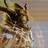 ODragono's avatar