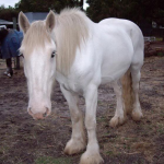 HorsesDrivingVans's avatar
