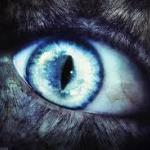 Bigwolfonbase's avatar