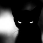KittyDarknes's avatar