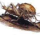 Fungal Crawler