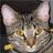 Ilkcs's avatar
