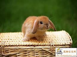 File:Cutie pie.jpg