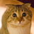 Sigar-cat,new animatronic