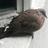 PigeonGuru's avatar