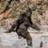Sasquatch101's avatar