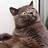 GomuZonaLight777's avatar