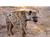 Hyena42