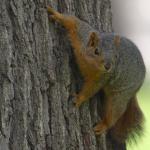 Squirrel1023's avatar