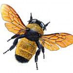 Killerbumblebee