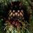Nubnuber's avatar