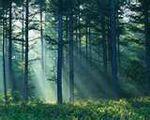 StormClan Forest