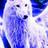 StarWolf01's avatar