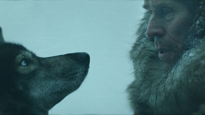 Willem Dafoe on His Canine Costar and Learning to Dog Sled for 'Togo' on Disney+