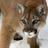 Cougarcat's avatar