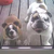 Booker-Bulldog