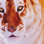 BishiePantsu's avatar