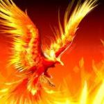 Phoenix Gaming's avatar