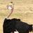 HouseofAustrich's avatar