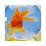 Fischi34123's avatar
