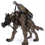 Bushcraft Medic