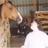 Horselover42589's avatar