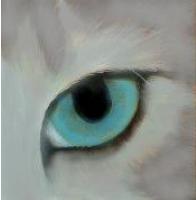 Kittypet1