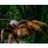 Molokaicreeper's avatar