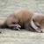 Gavin The Otter