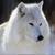 Fire-Snow-Wolf