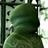 Synmeha's avatar