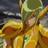 Avatar de Tokisada de Elfo