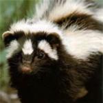 Skunky 72's avatar