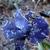 Icy Iris