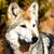 Goner Wolf