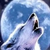 WolfWillowTheWarrior