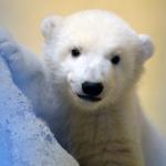 Coldy Snow's avatar