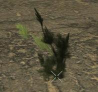 PlantedMaple1m