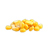CornSeed